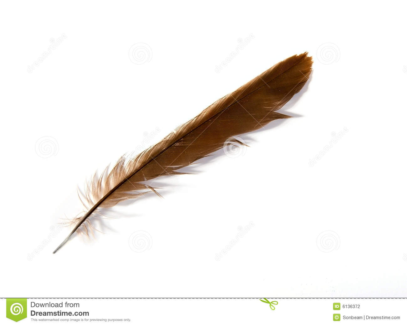 Duck Feather Stock Photography - Image: 6136372: dreamstime.com/stock-photography-duck-feather-image6136372