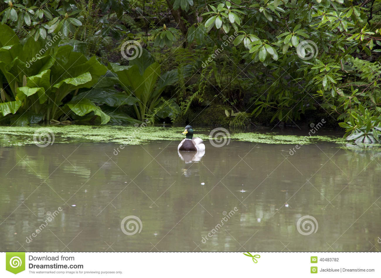 Garden duck pond royalty free stock photography for Pond dealers