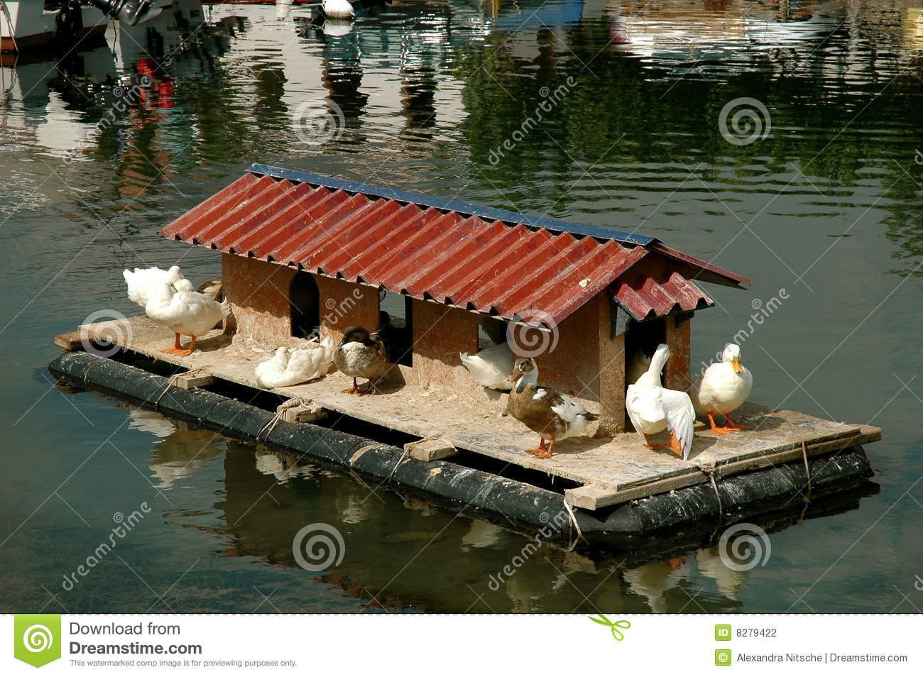 Duck house stock photography image 8279422 for House duck