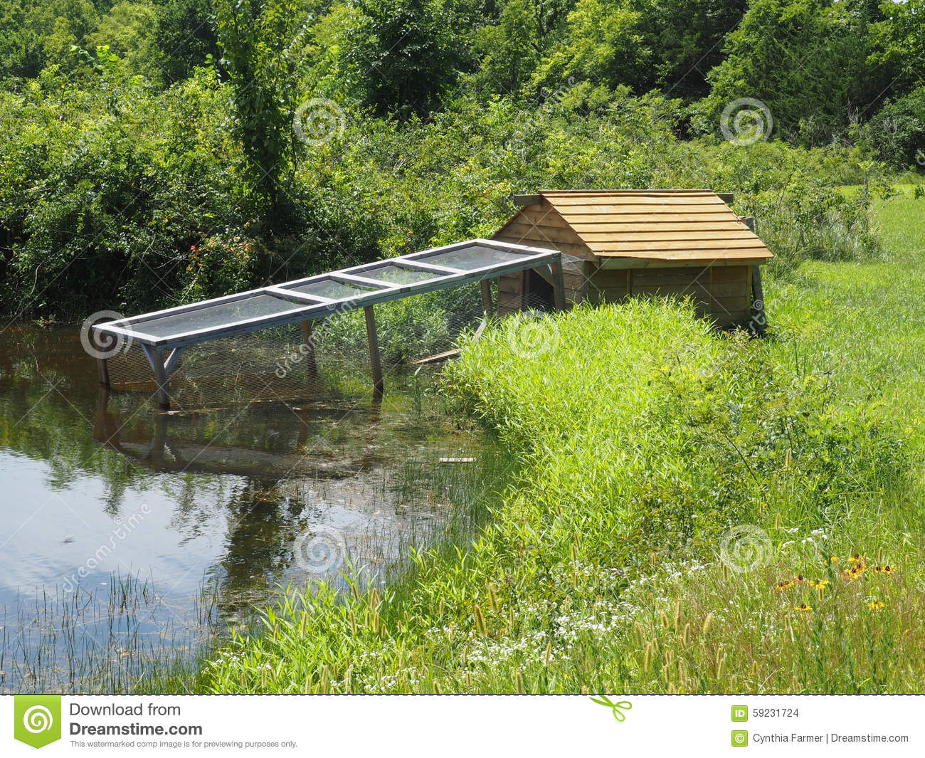 Duck house by a pond stock photo image of grass mesh for Building a duck house shelter