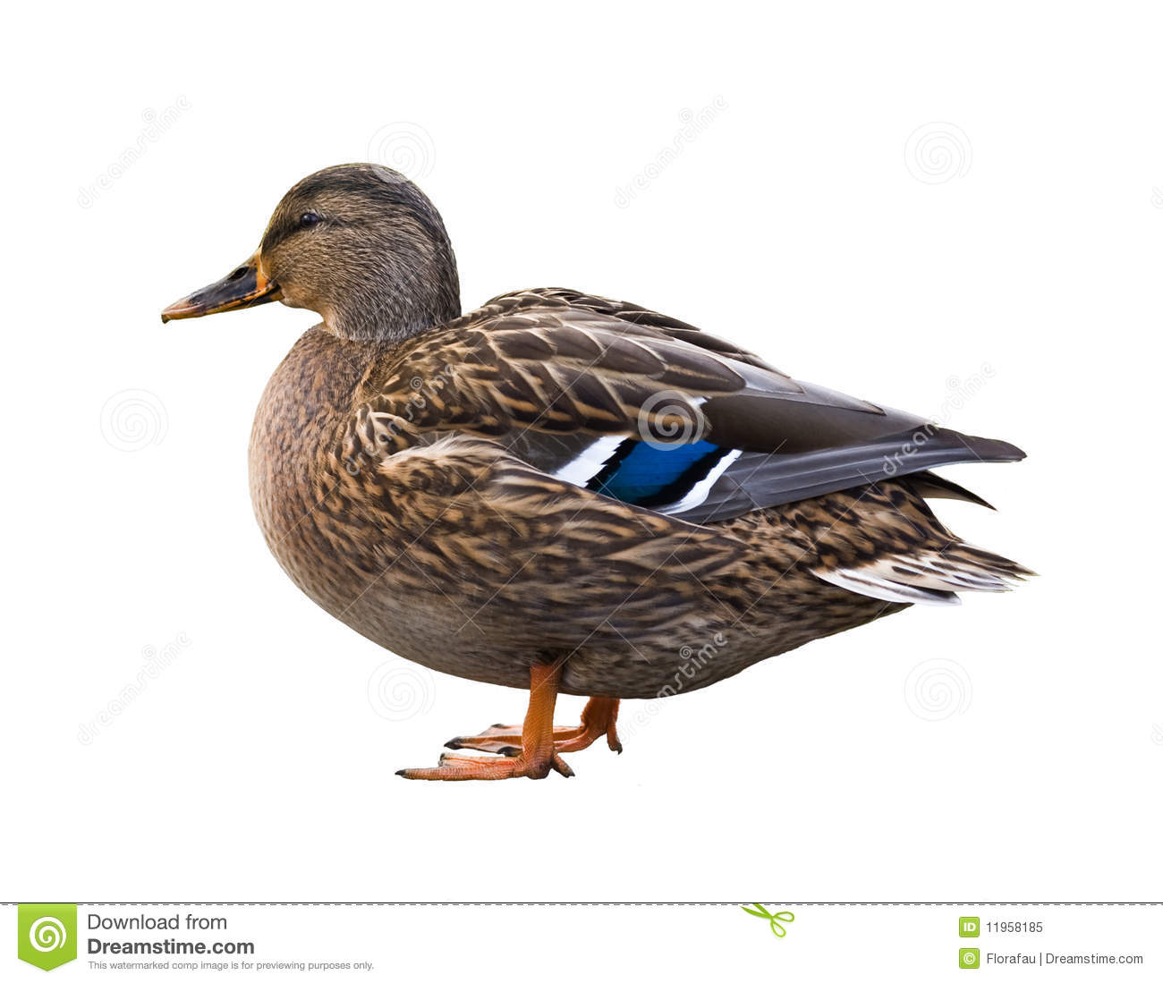 hindu singles in duck So when we tag a question about a hindu story as mythology (in a single or two word) ask the duck you'll need to.