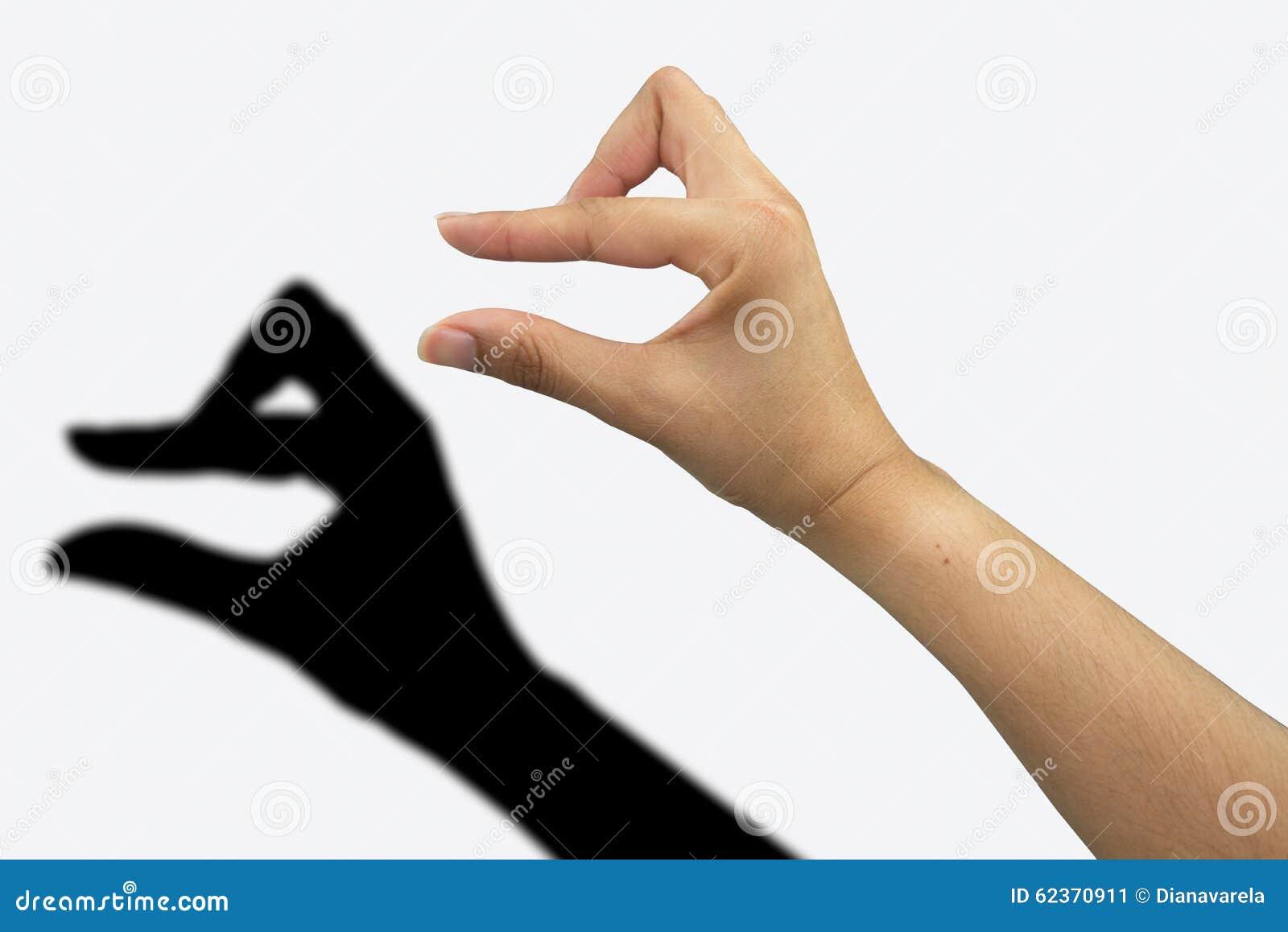 Duck Shadow Hand Stock Photo Image 62370911
