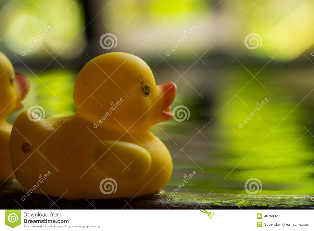 Duck toy on water stock image. Image of garden, bath - 40768929