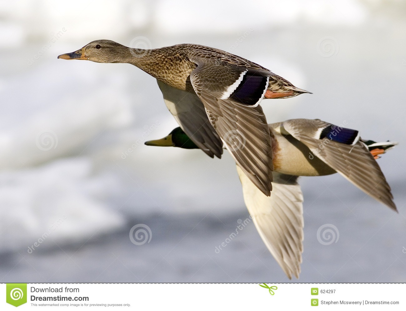 Ducks In Flight Royalty Free Stock Photography - Image: 624297