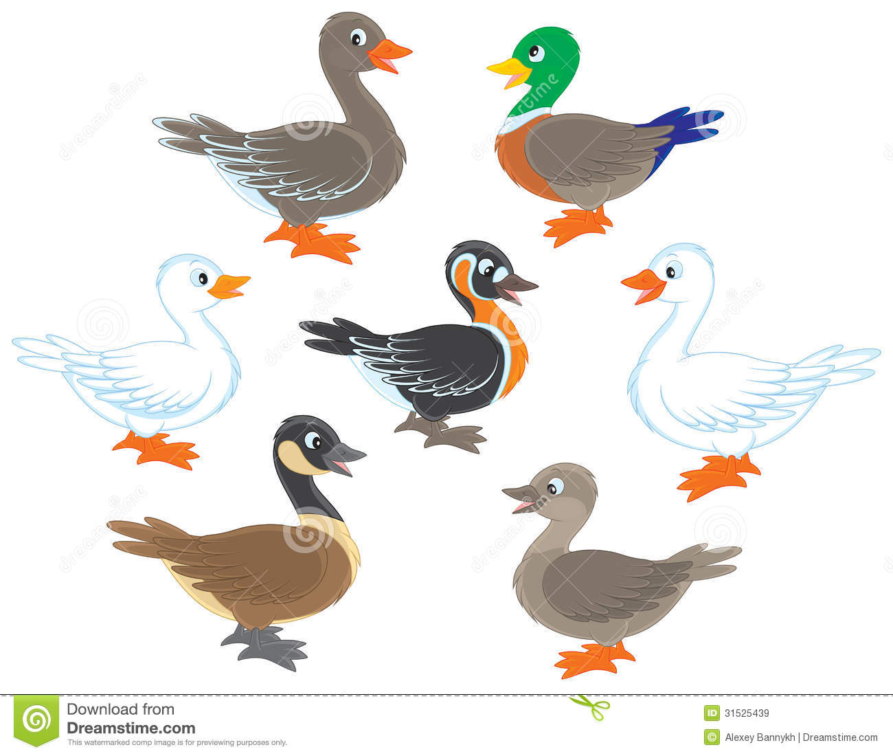 Ducks And Geese Stock Vector Image Of Farm Waterfowl