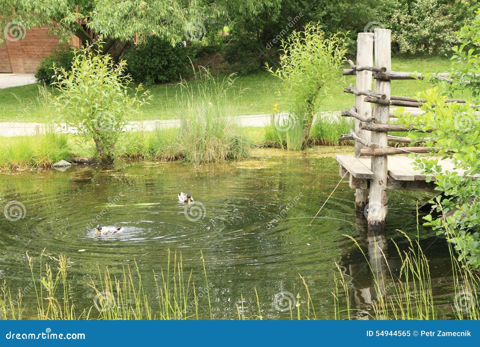 Ducks on pond stock image 20867827 for Pond dealers