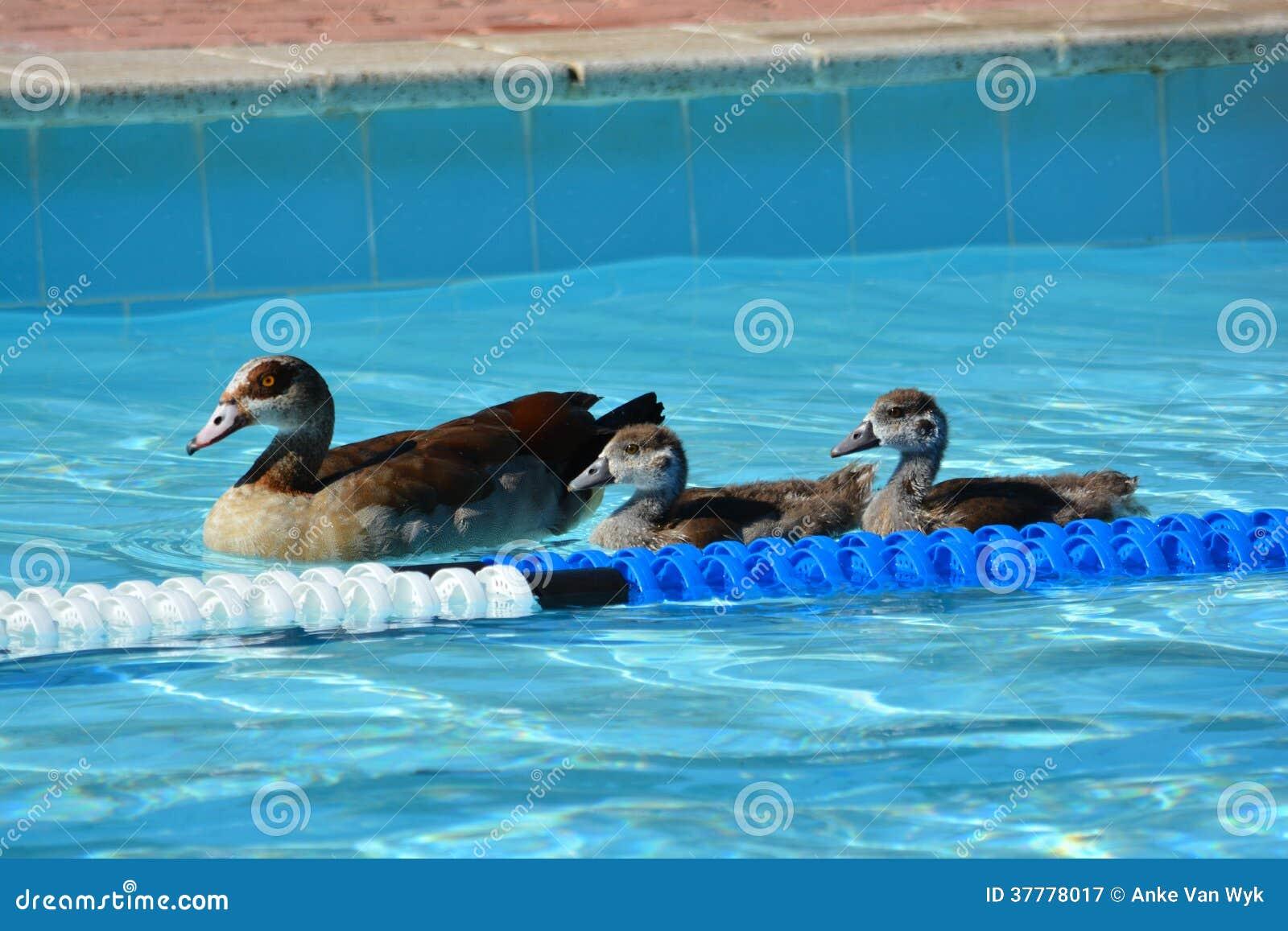 Summer Fun Royalty Free Stock Photography Image 37778017