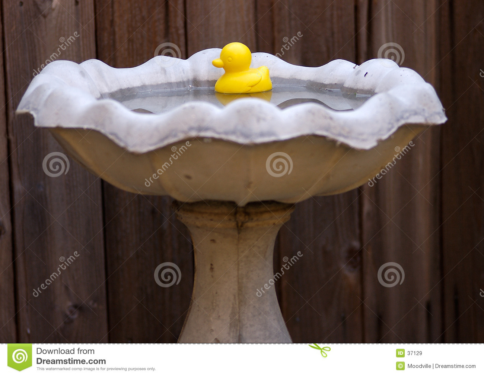 Ducky gumy