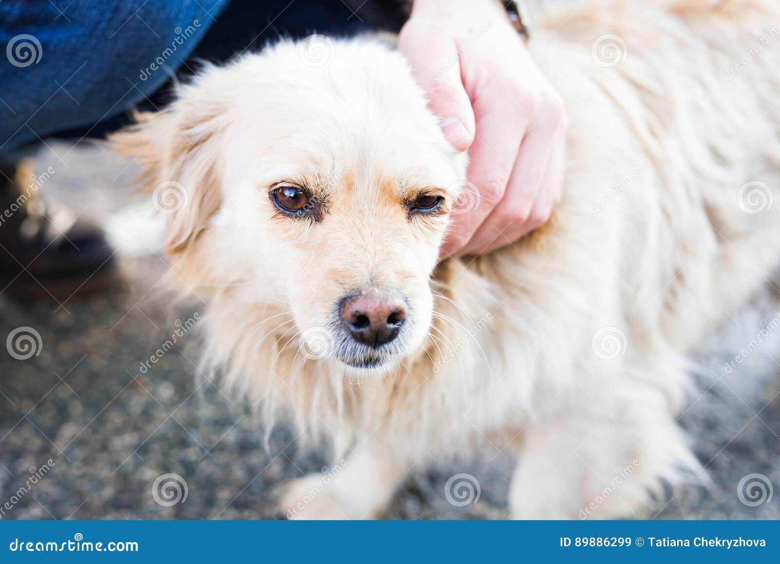 Dueño que acaricia suavemente su perro