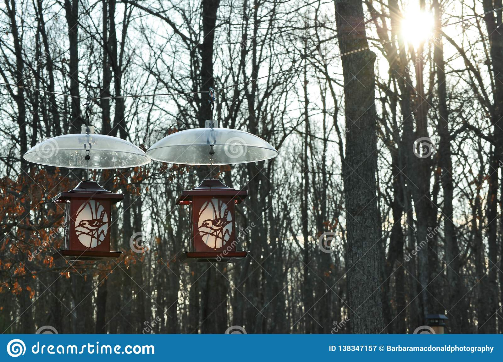 Due alimentatori dell uccello che appendono con gli schermi dello scoiattolo