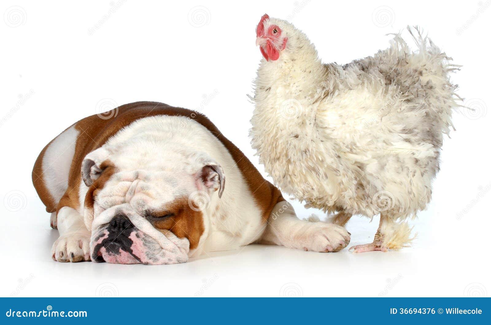 Due animali