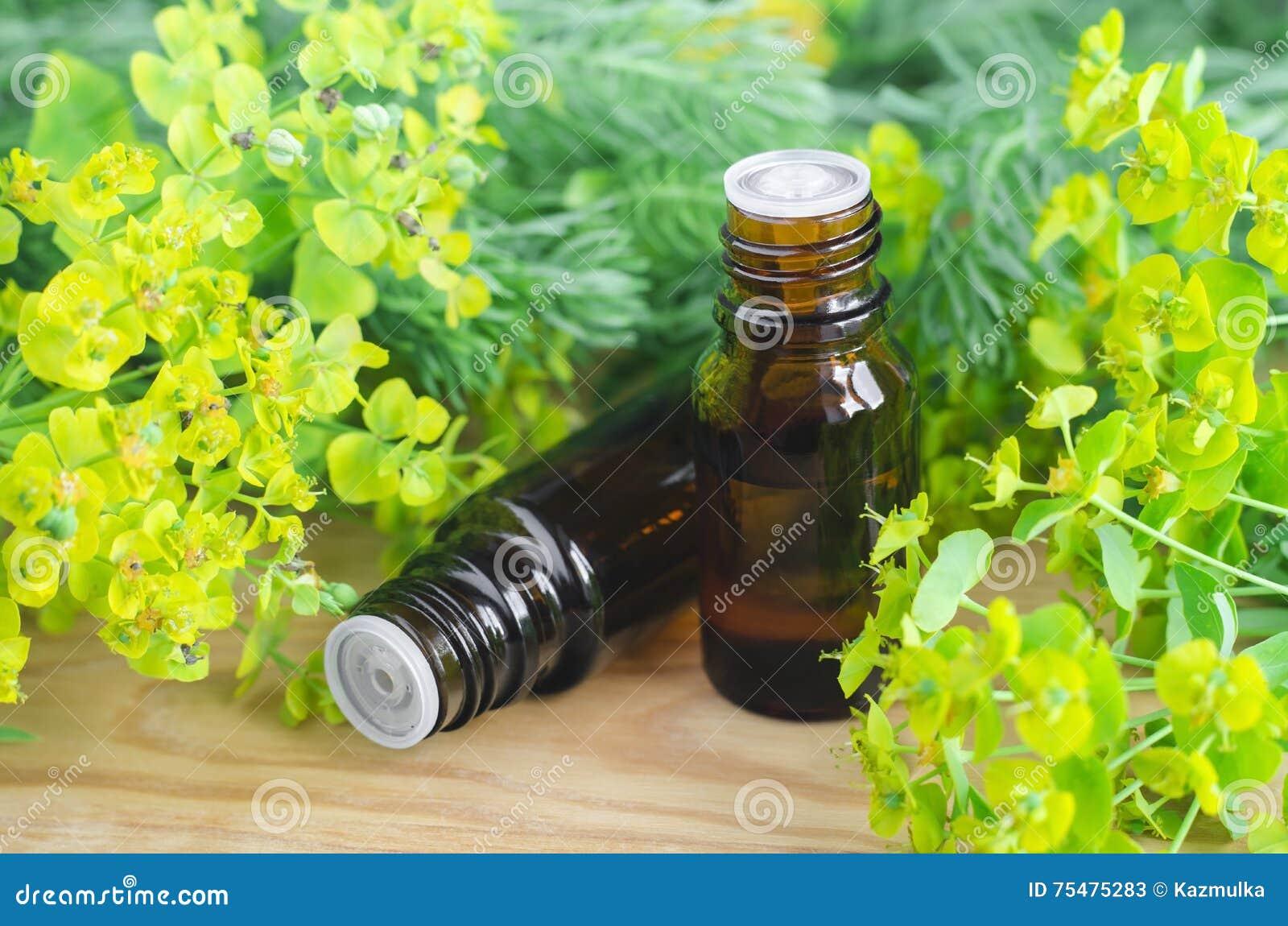 Due bottiglie dei cyparissias dell euforbia, estratto di euforbia del cipresso (tintura del Milkweed, infusione, olio di erbe)