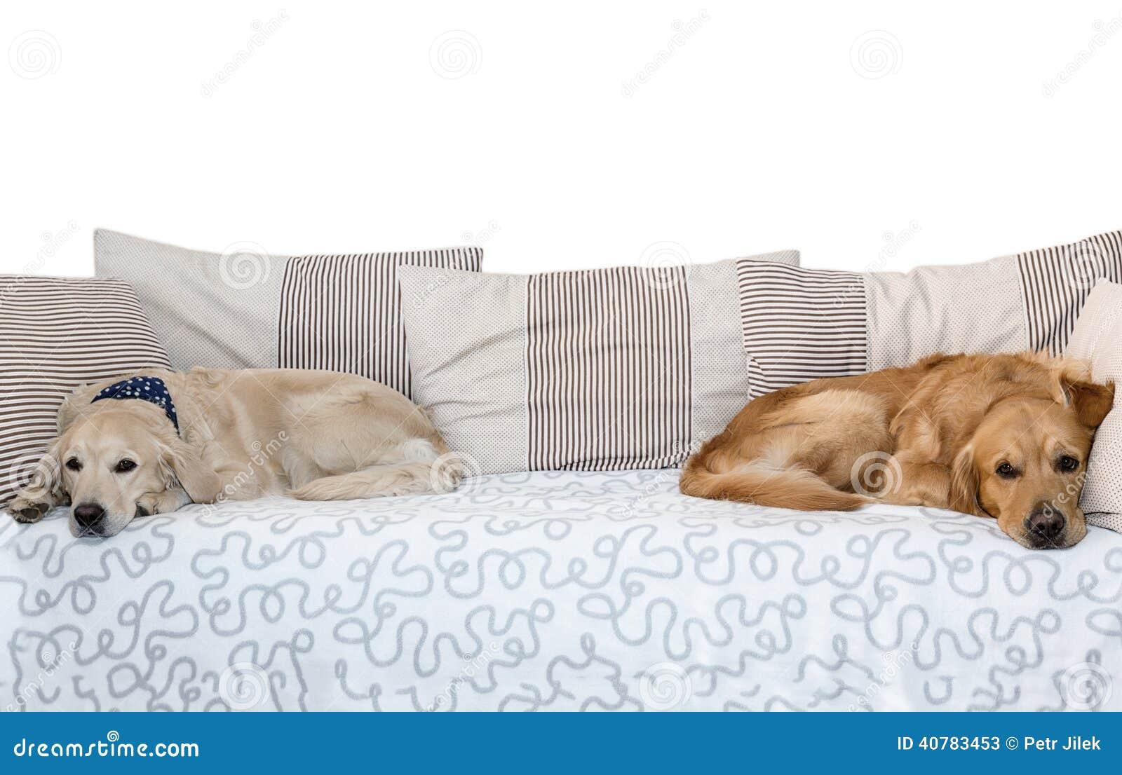 Due cani che si trovano a letto sul fondo bianco - Letto che si chiude ...