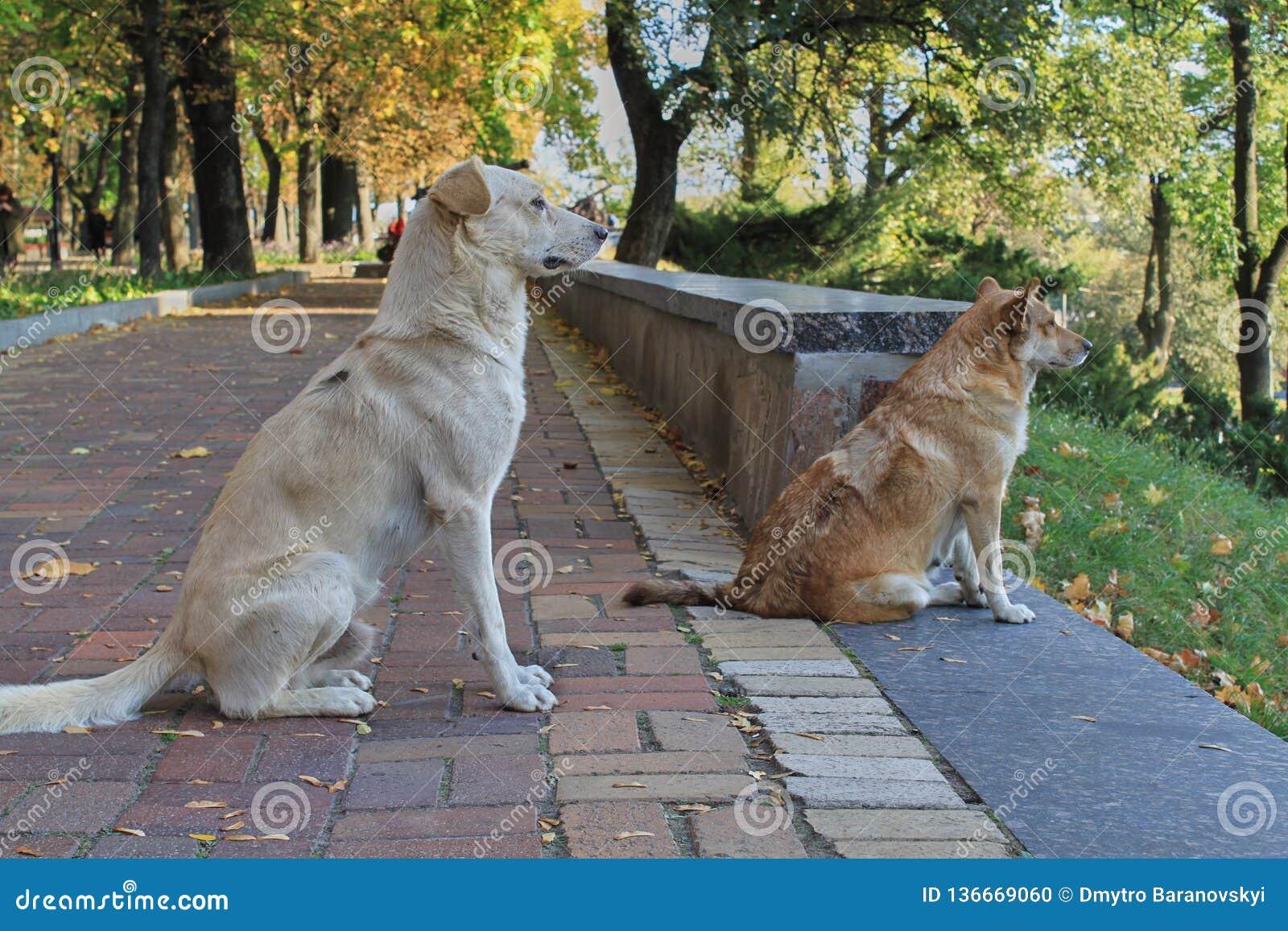 Due cani stanno sedendo sulla strada e stanno esaminando la distanza Primo piano