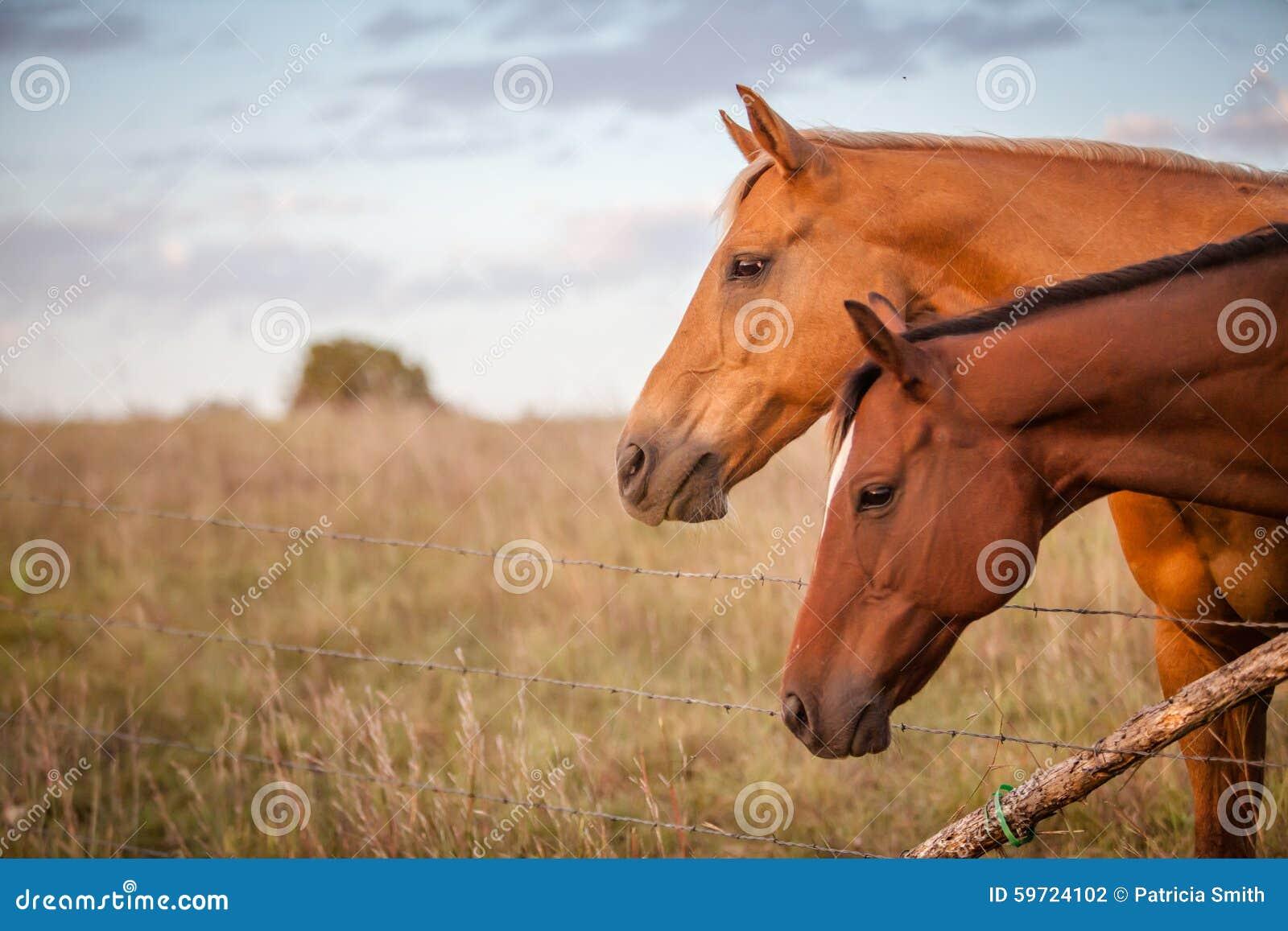 Due cavalli al tramonto