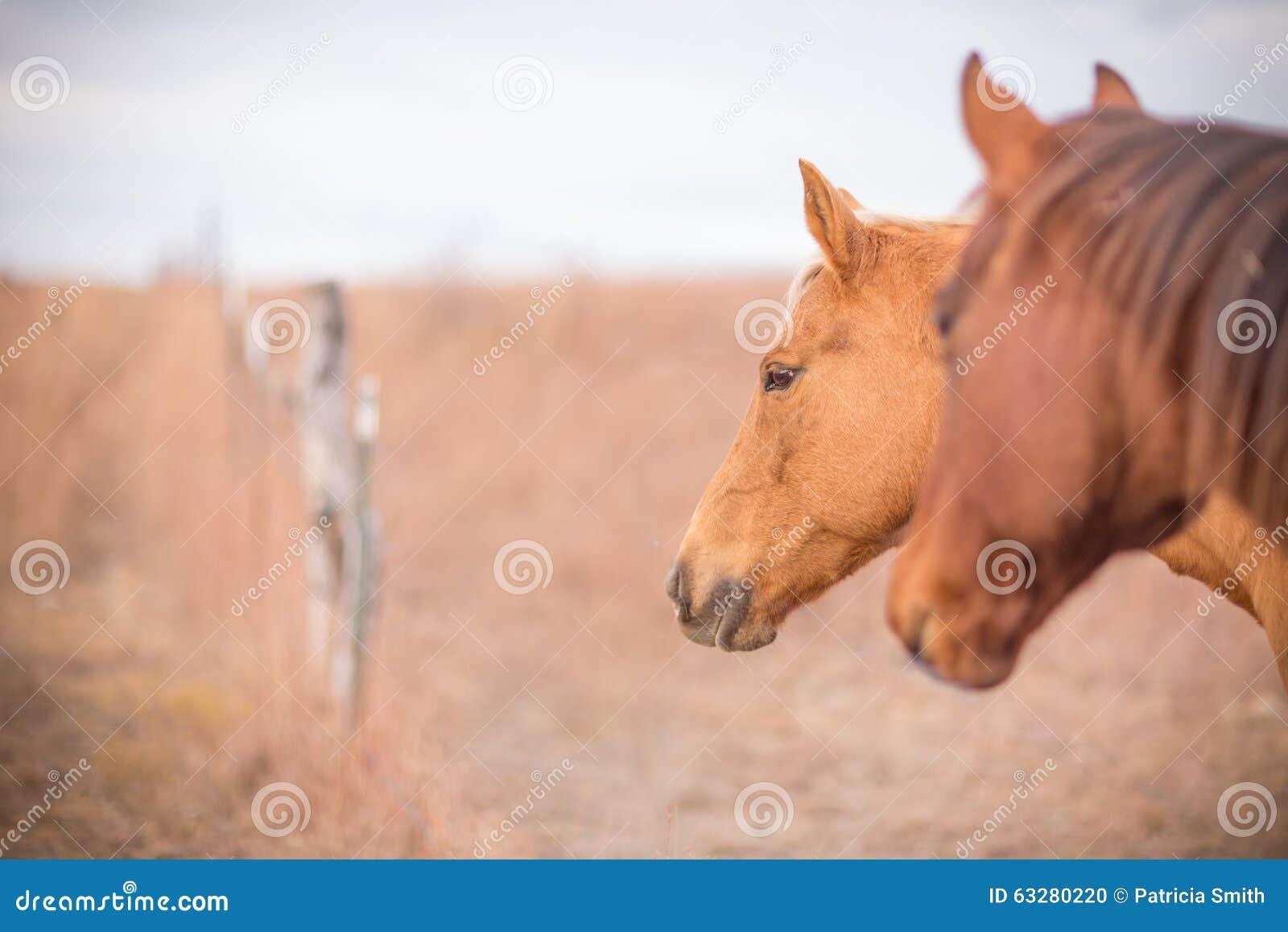 Due cavalli all entrata del portone