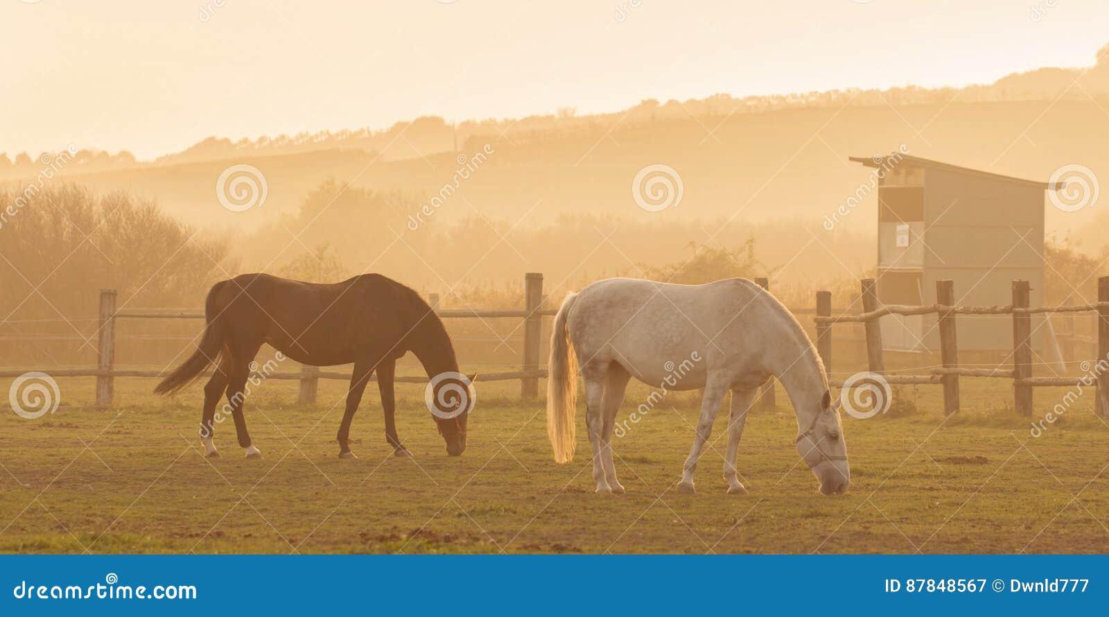 Due cavalli nel tramonto