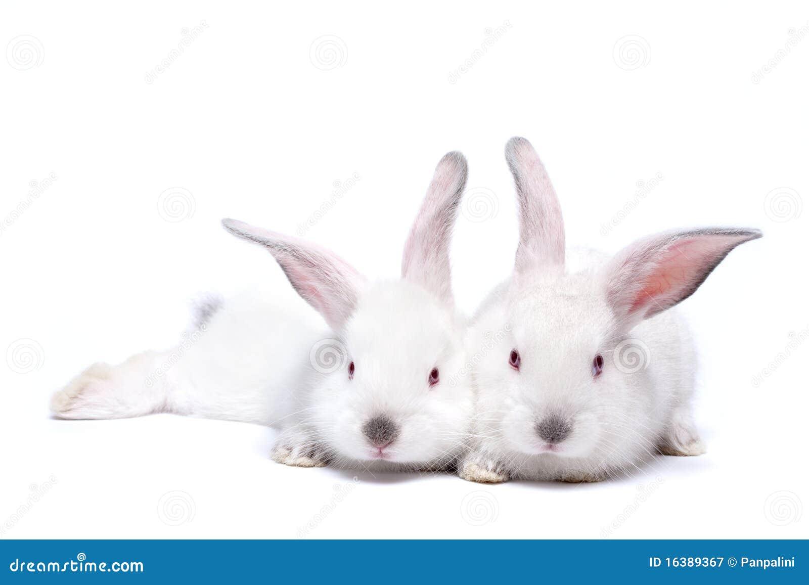 Due conigli isolati bianchi svegli del bambino