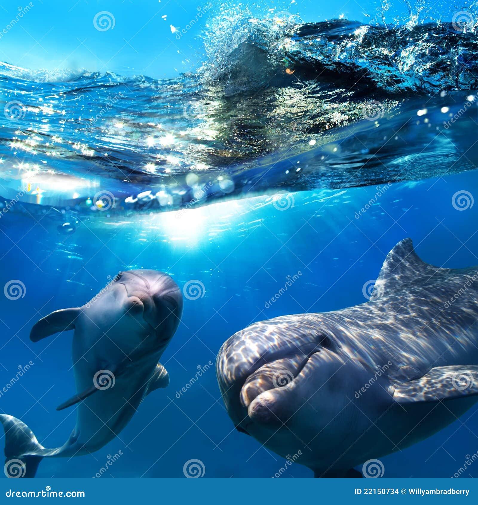 Due delfini divertenti che sorridono underwater