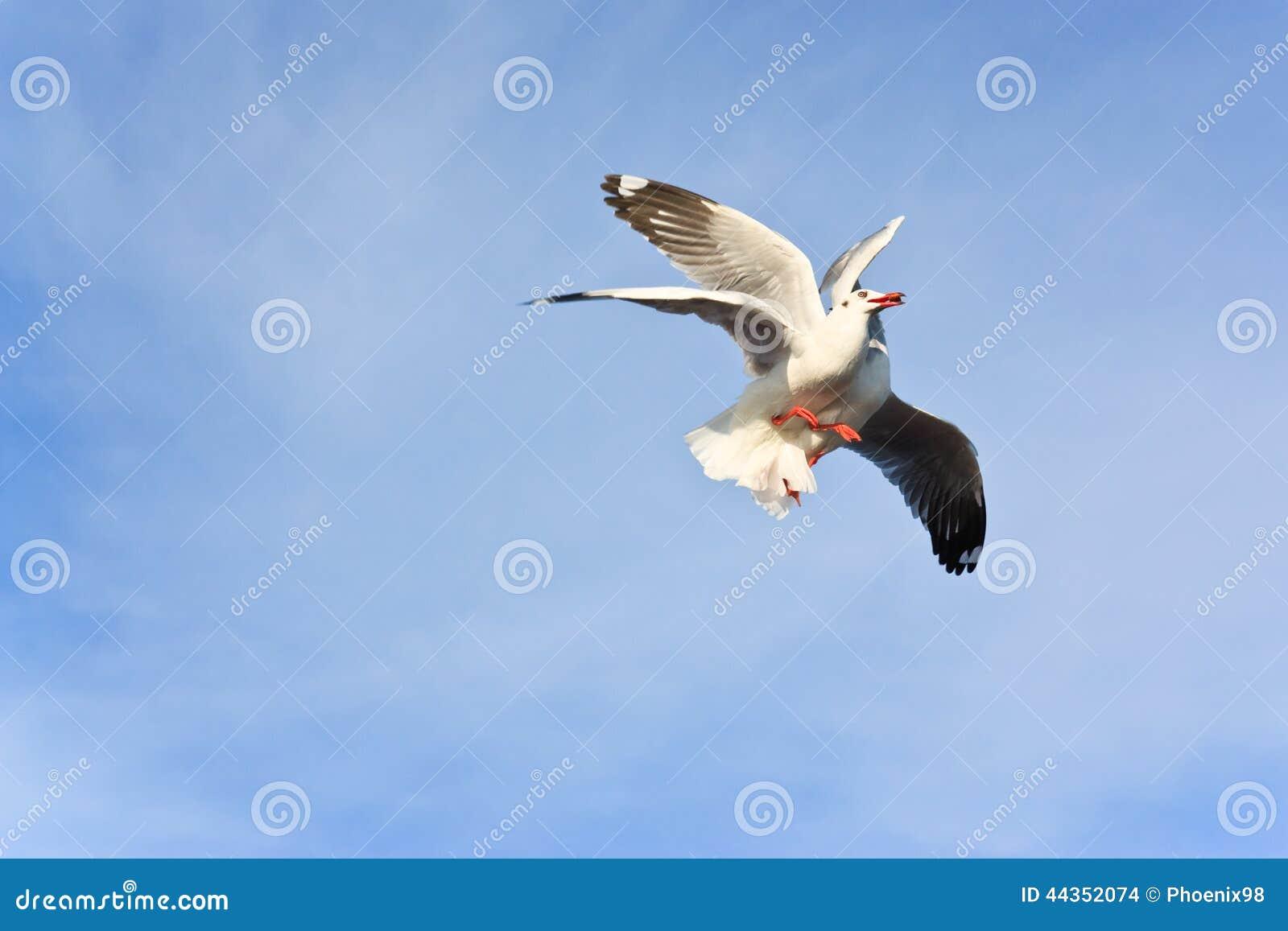 Due gabbiani che mangiano sul cielo