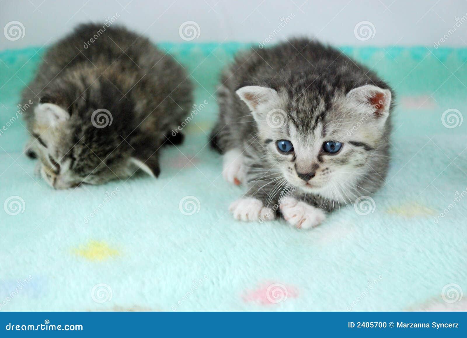 Due gattini appena nati fotografia stock immagine di for Piccoli piani di coperta