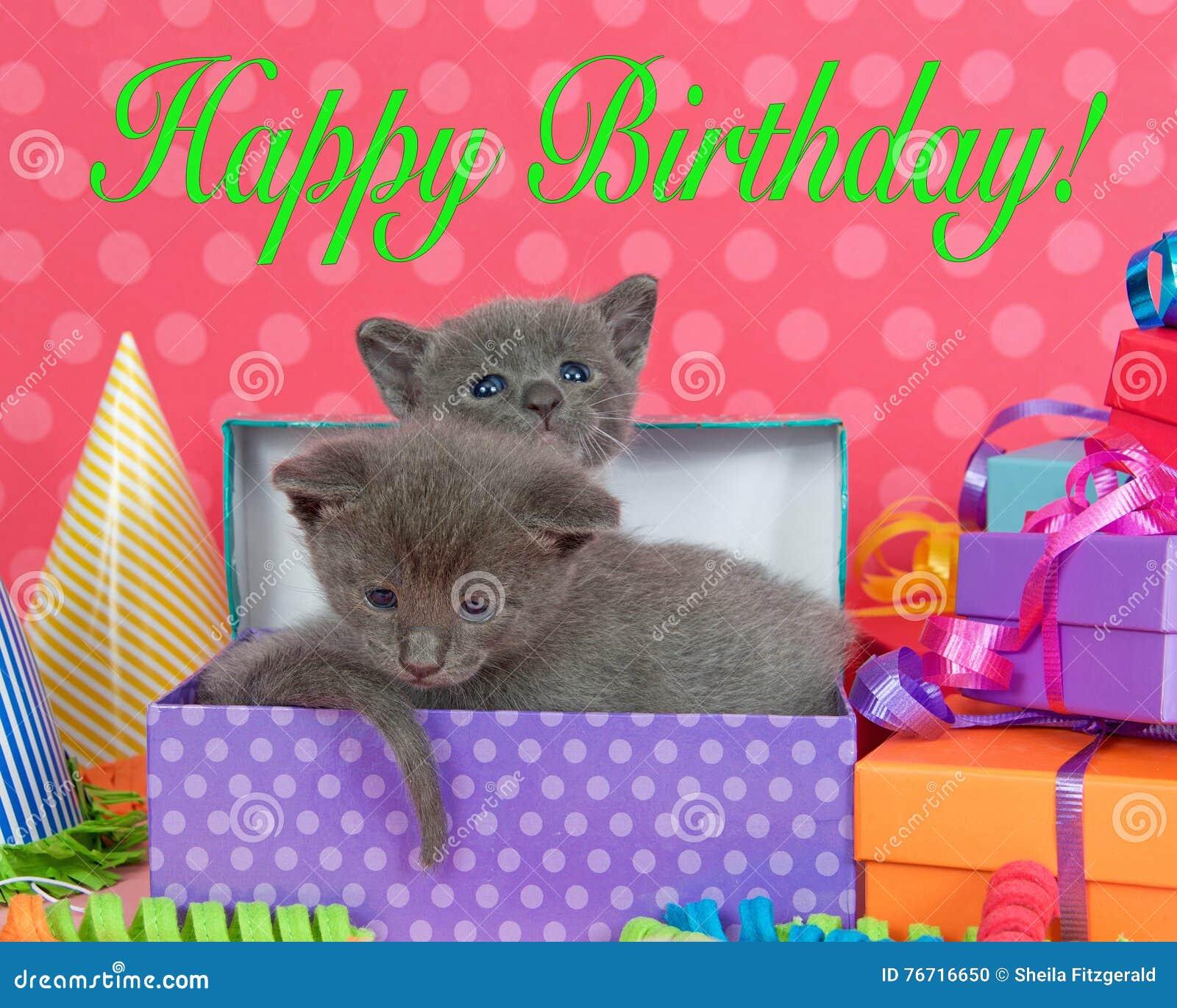 Due Gattini Di Un Mese In Un Mucchio Delle Scatole Di Compleanno