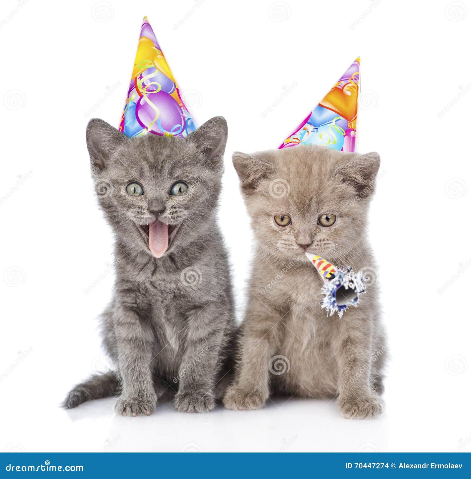 Due Gattini Divertenti Con I Cappelli Di Compleanno Isolato Su