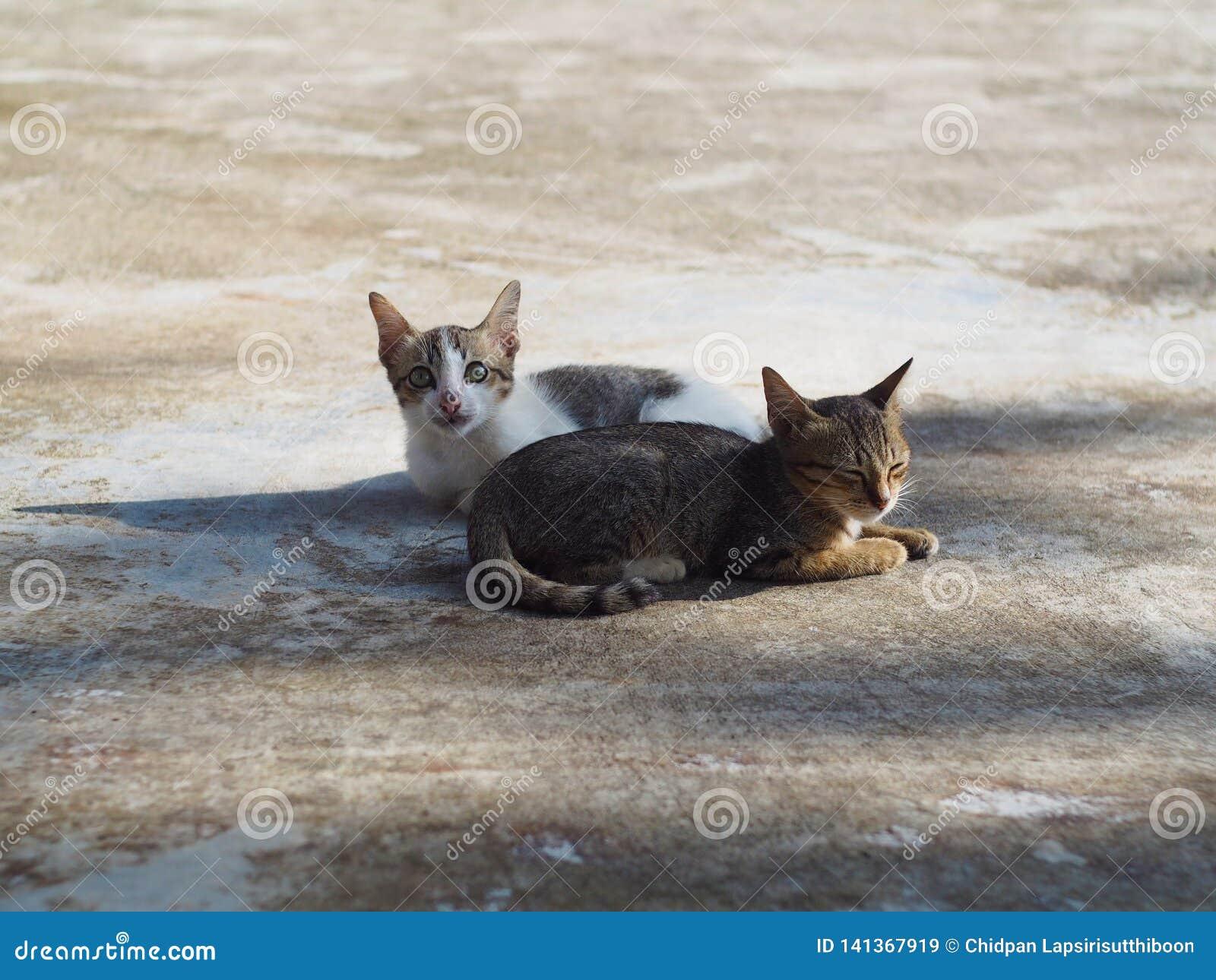 Due gattini, giovane gatto stanno rilassando sul pavimento