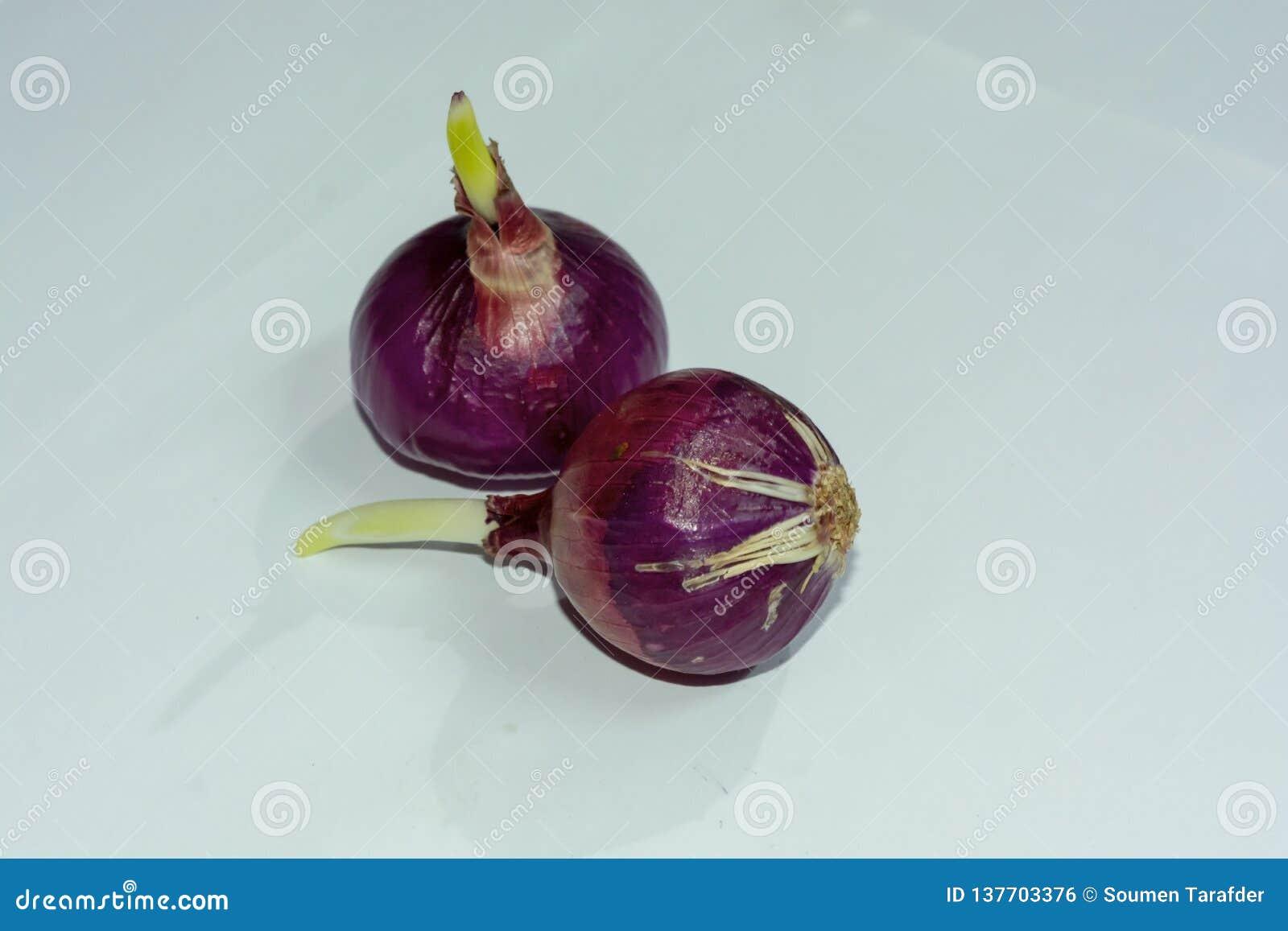 Due hanno germinato le cipolle rosse su fondo bianco isolato