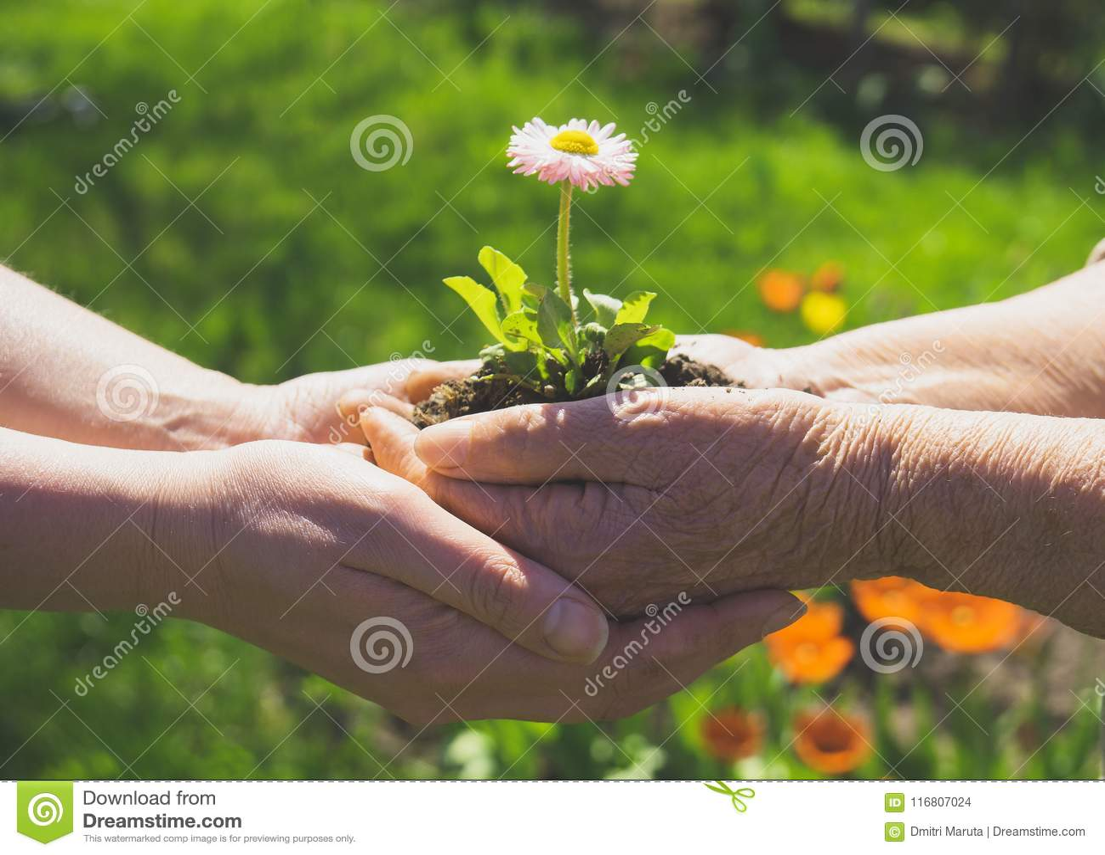Due mani che tengono fiore