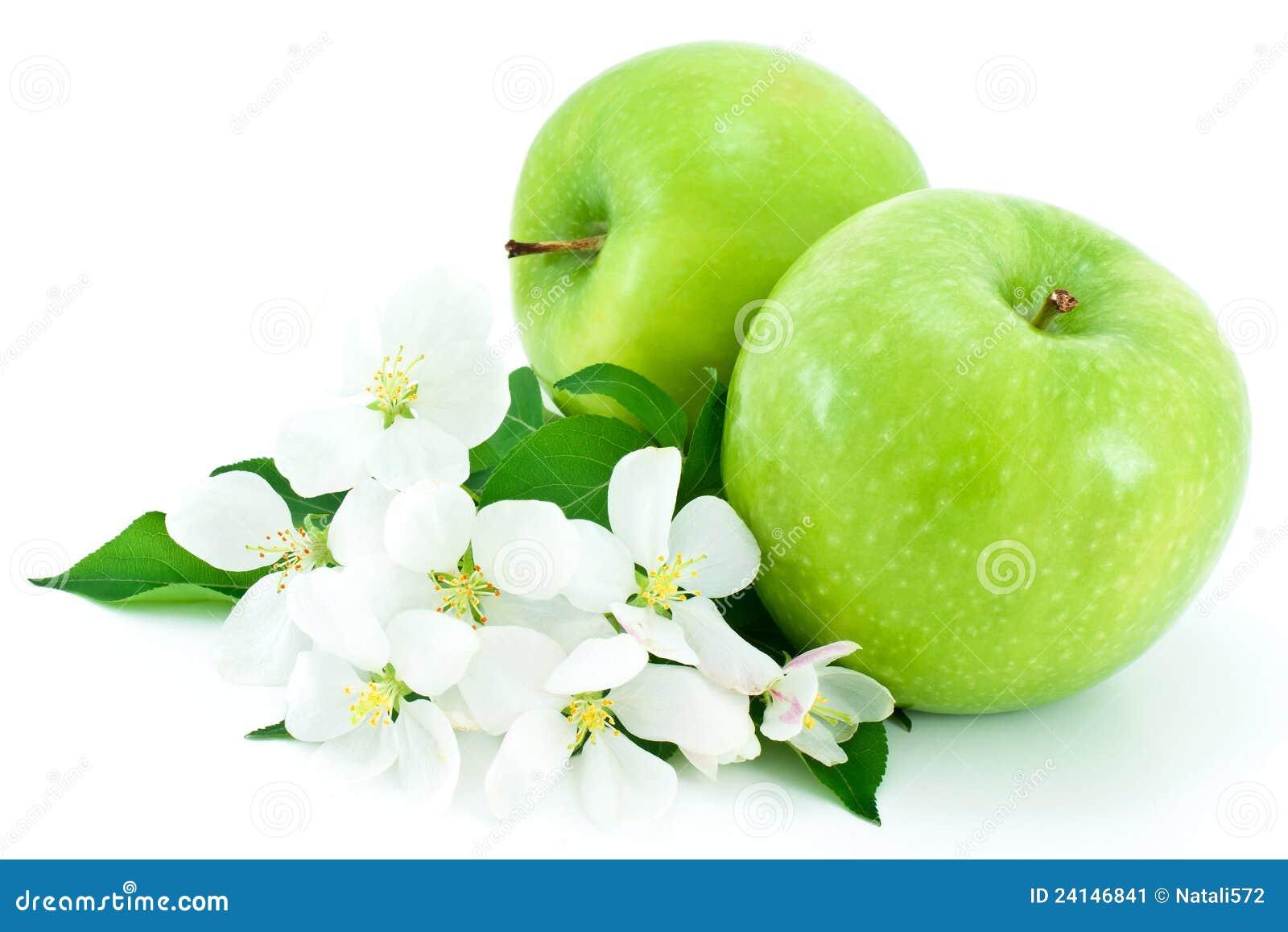 Due maturi fiori bianchi verdi e del mela immagine stock for Fiori verdi