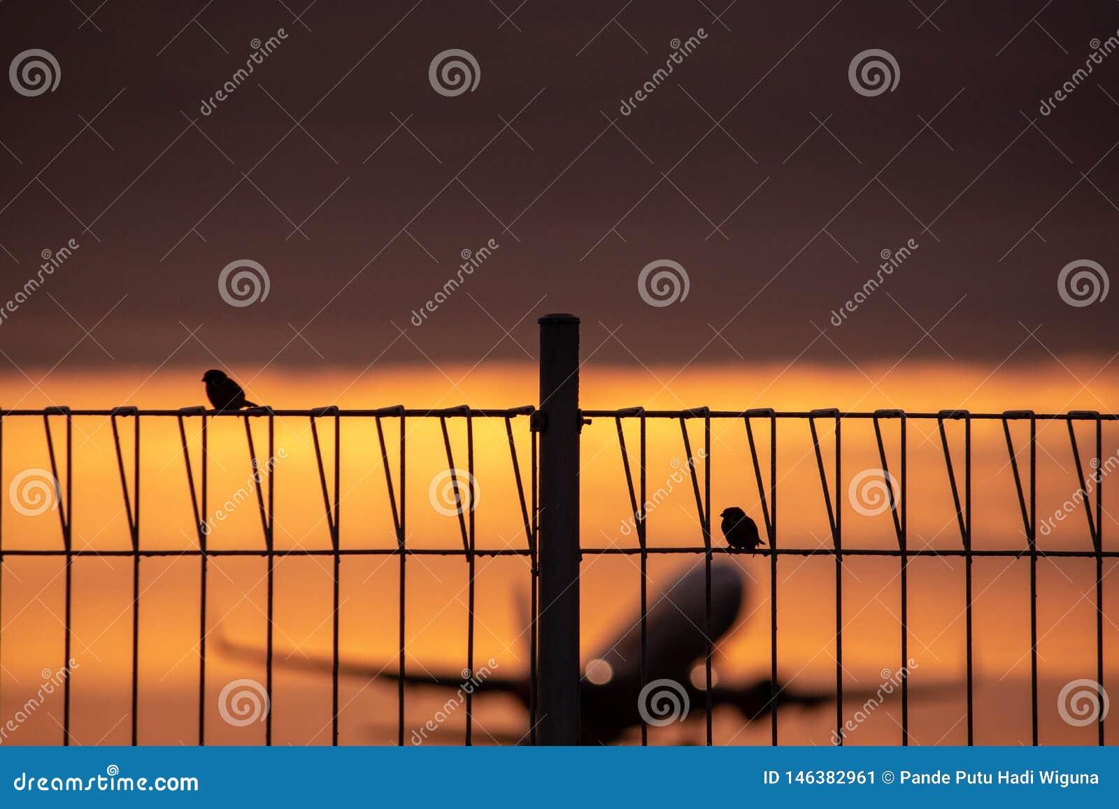 Due passeri si appollaiano su un recinto del ferro con un fondo piano della sfuocatura che decolla al crepuscolo caldo ed arancio