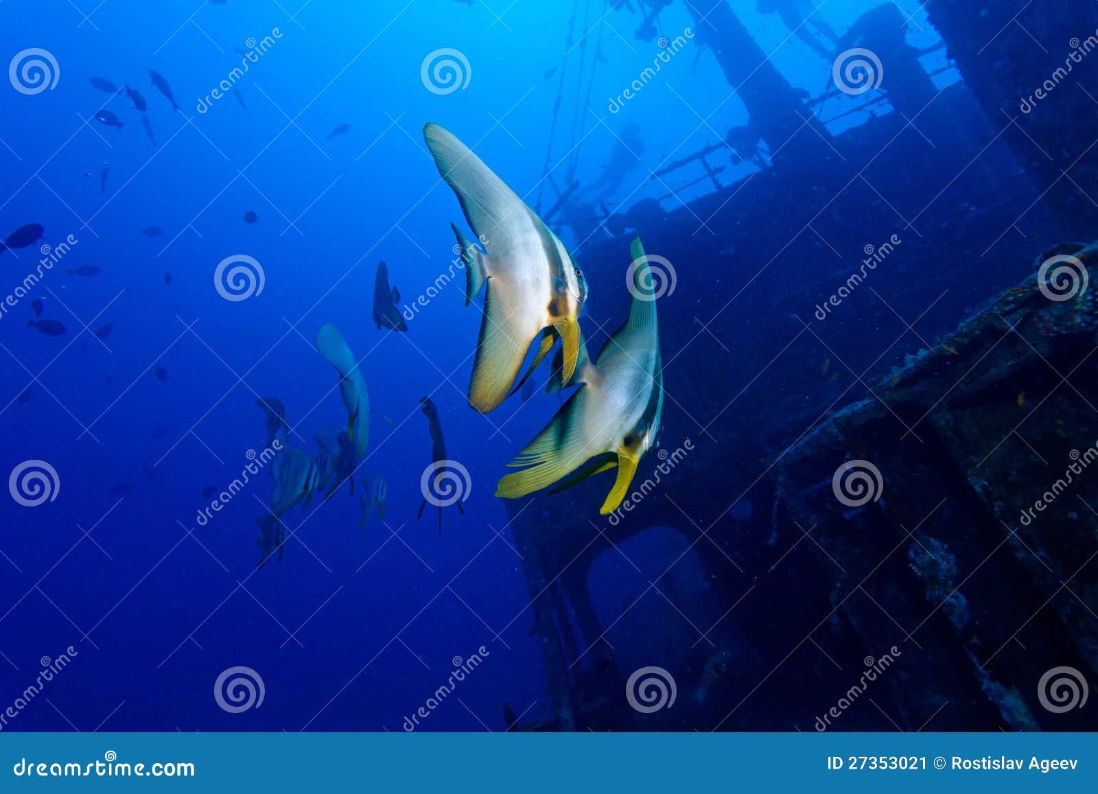 Due pesci e naufragi tropicali