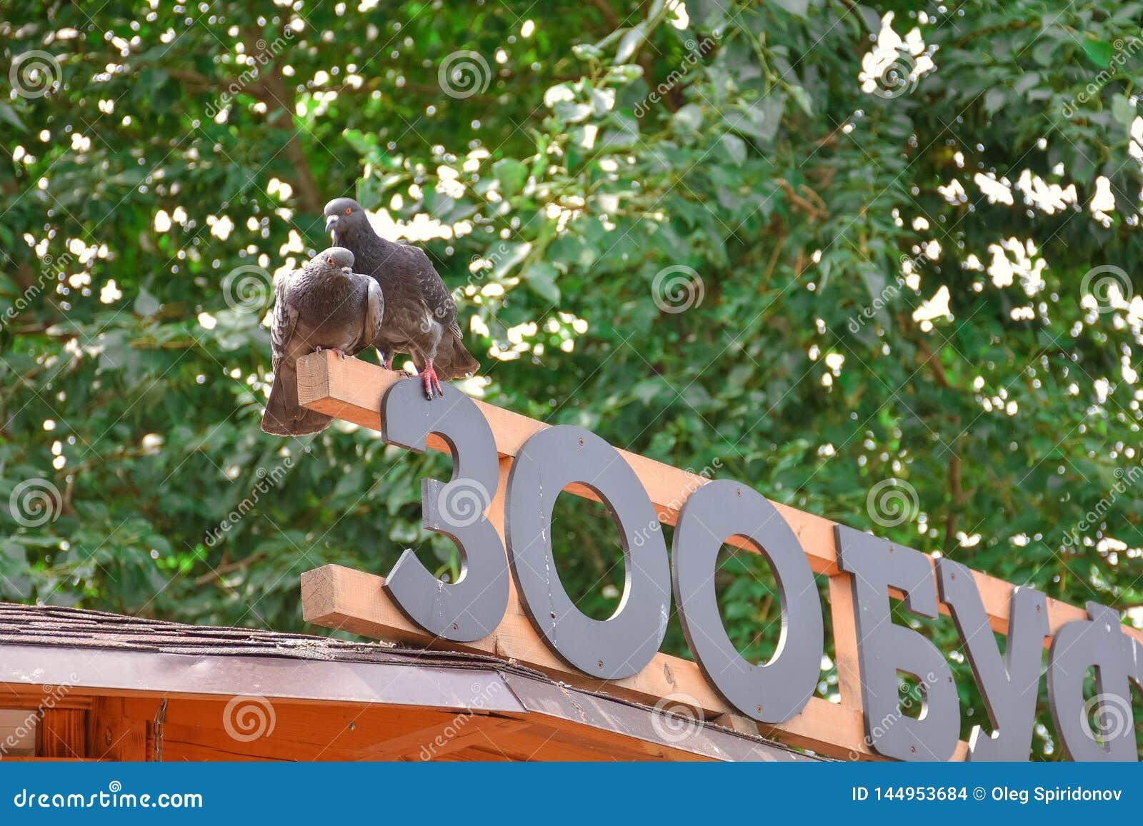 Due piccioni sul segno
