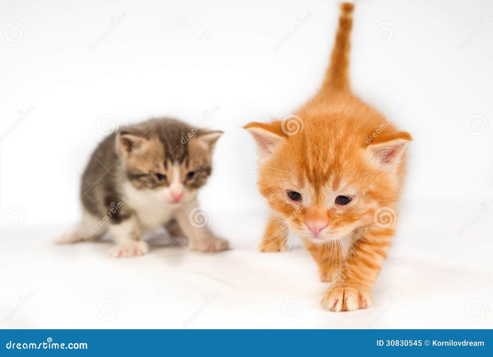 Due piccoli gattini rossi divertenti dei capelli