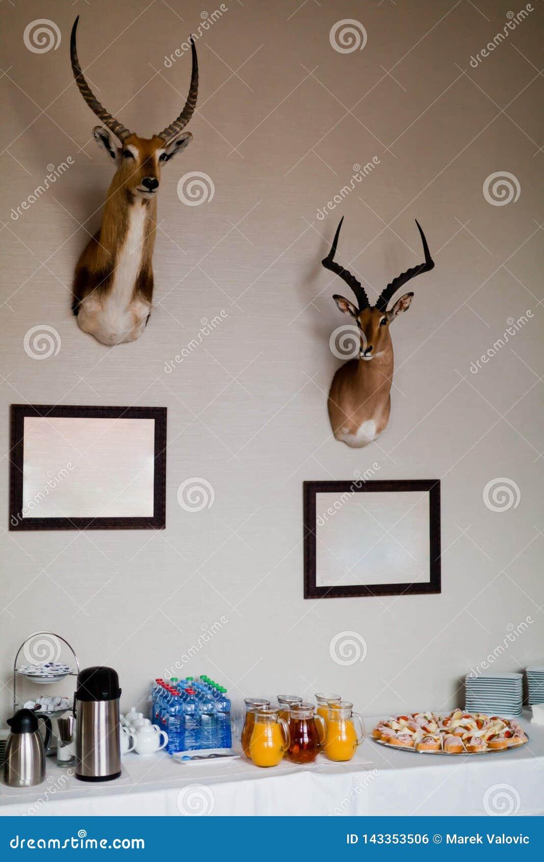Due trofei di antilope sulla parete sopra la pausa caffè