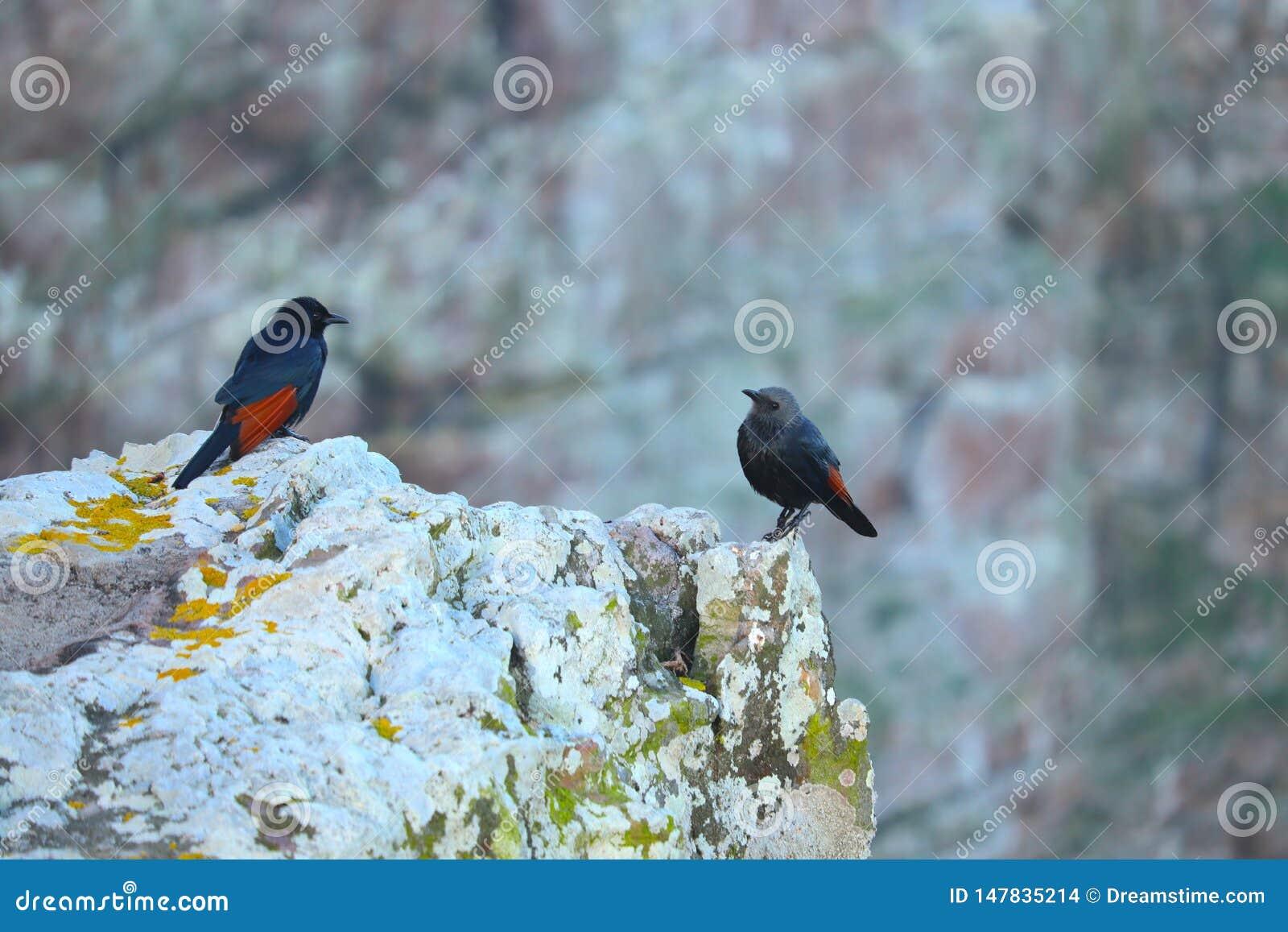 Due uccelli che se esaminano