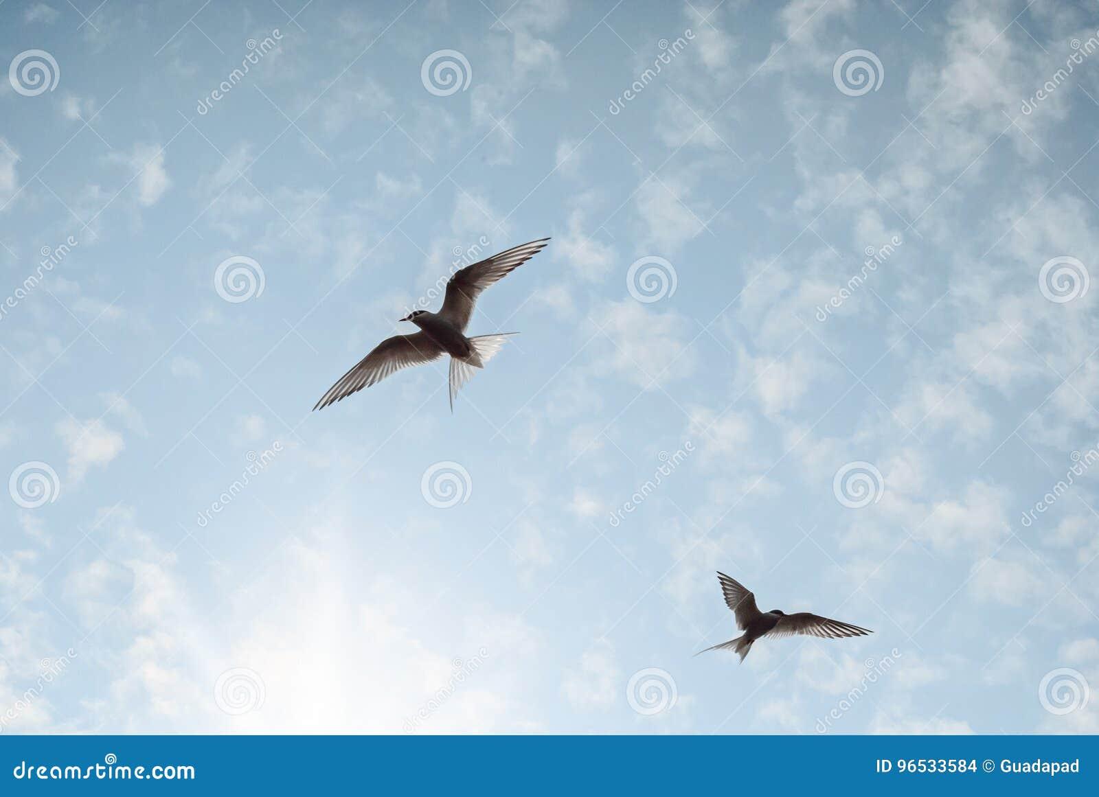 Due uccelli stanno volando nel cielo blu-chiaro che raggiunge per il sole