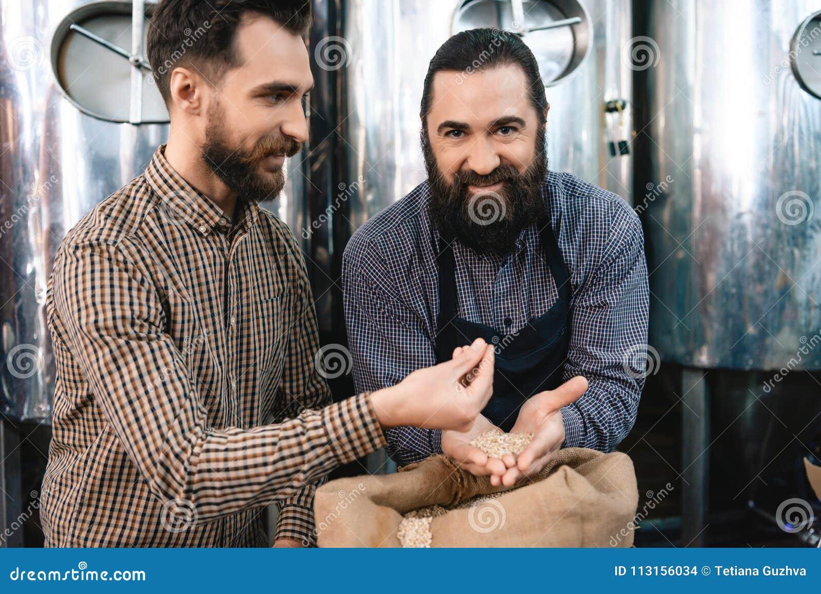 Due uomini barbuti adulti controllano la qualità di malto d orzo mentre in fabbrica di birra Processo di fabbricazione della birr