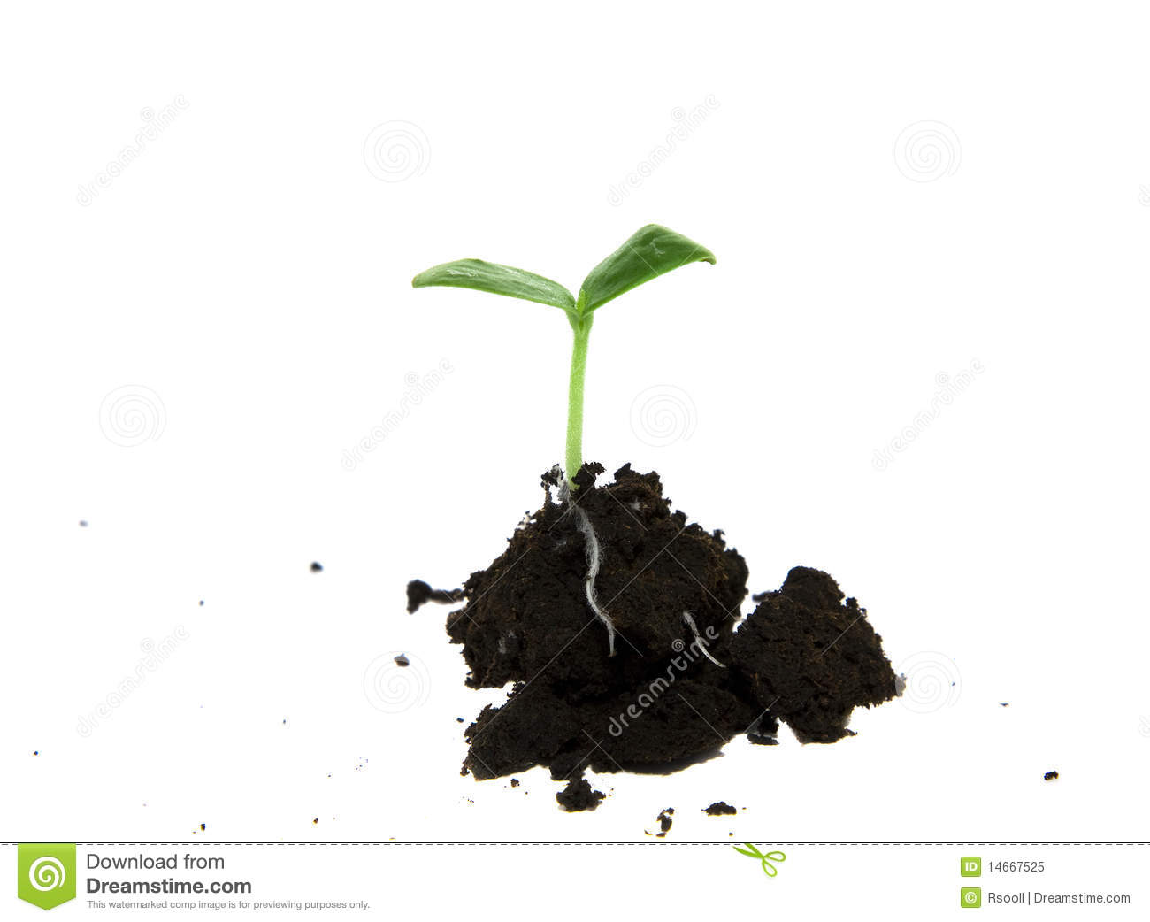 The dug out plant