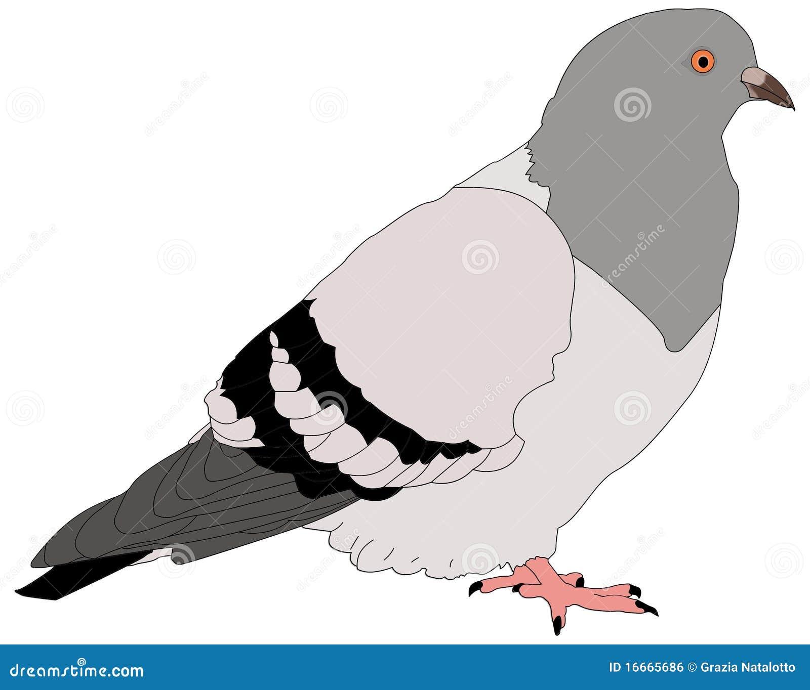 Duif stock illustratie illustratie bestaande uit duif 16665686 - Dessin de pigeon ...