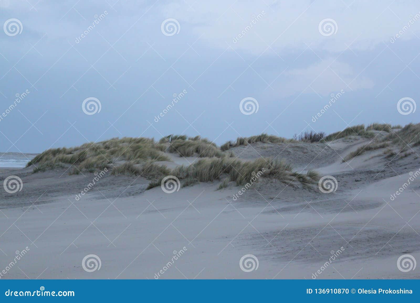 Duinen met gras bij de kust van de Noordzee in Zeeland in Nederland