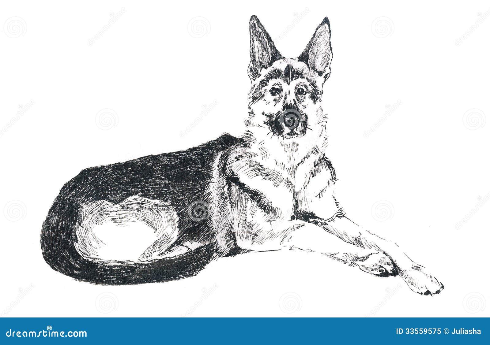 duitse herder stock illustratie illustratie bestaande uit