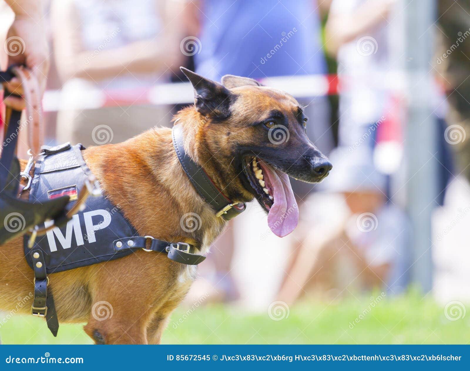 Duitse militaire politiehond