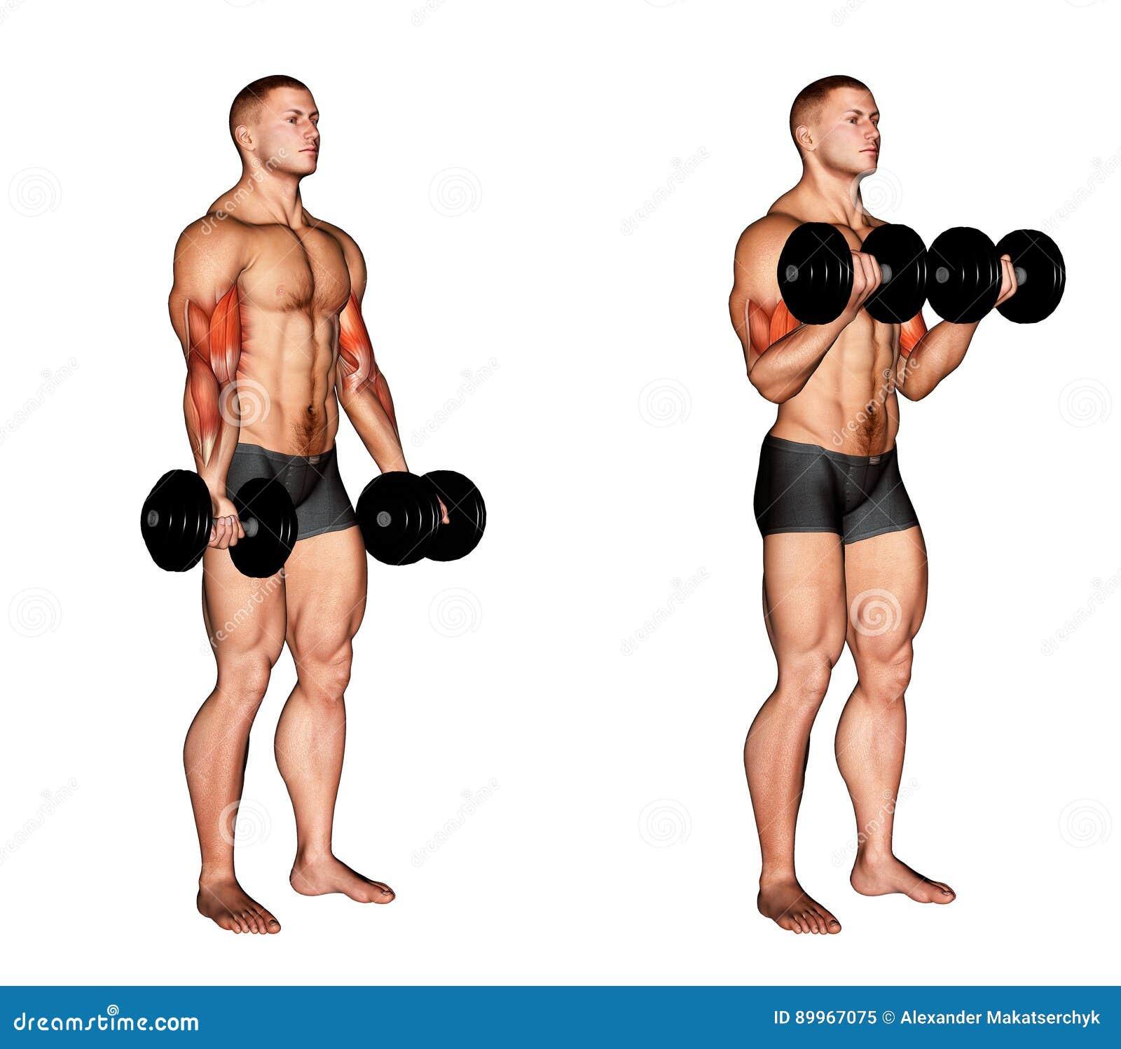 _ Dumbbell bicepsów kędzior