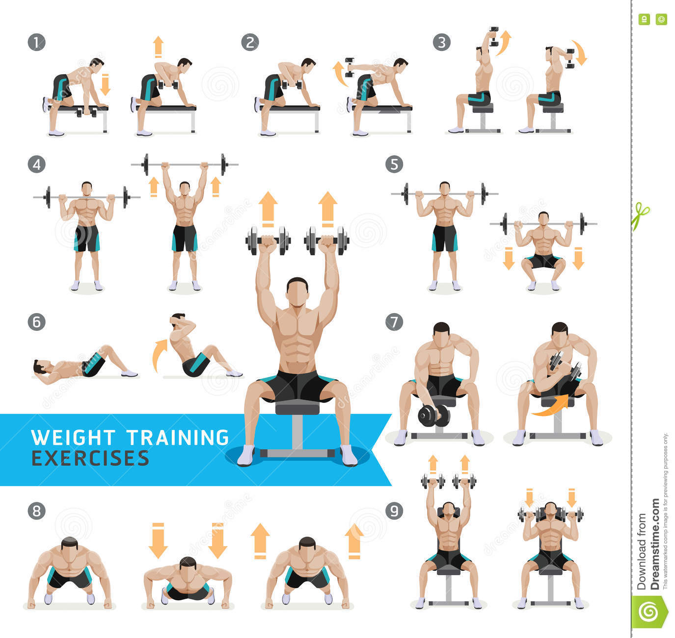 Weight Lifting Gym Fitness Workout Exercise Training Body: Dumbbell Exercises And Workouts Weight Training. Stock