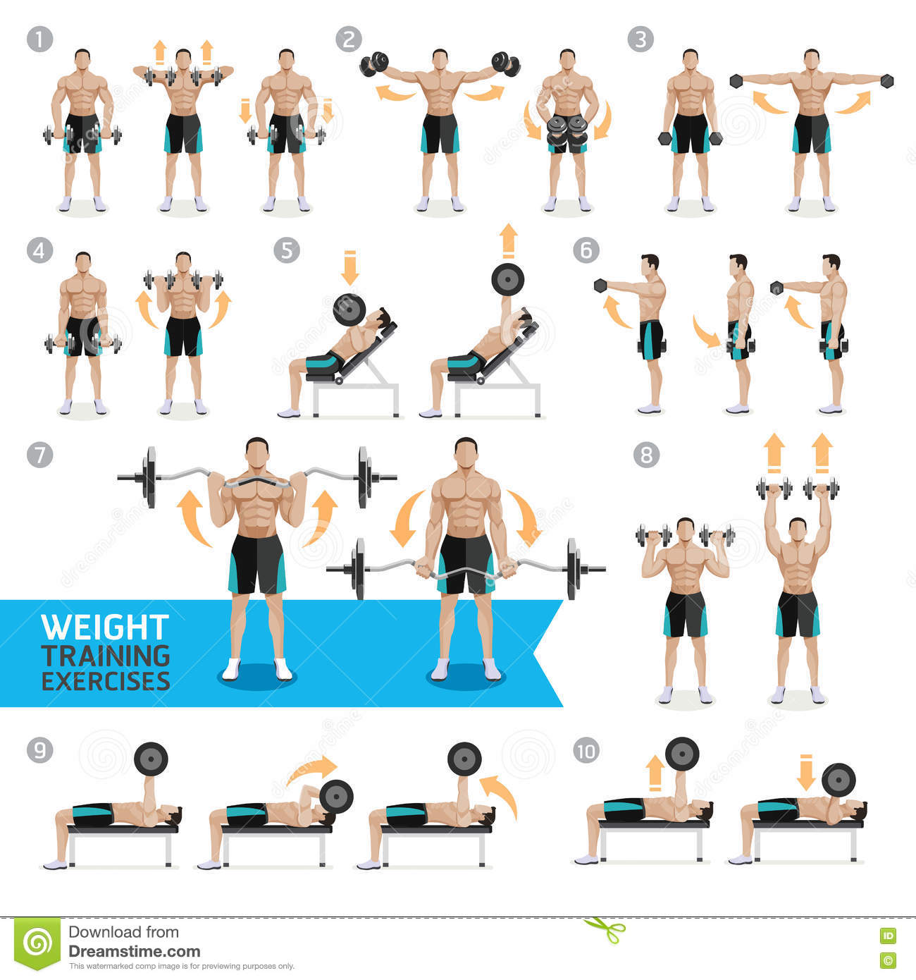 Dumbbell Exercises And Workouts Weight Training Stock