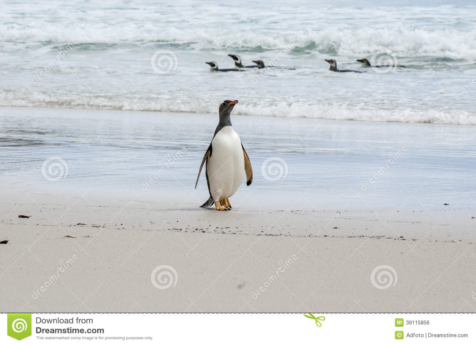Dumny być Gentoo pingwinem