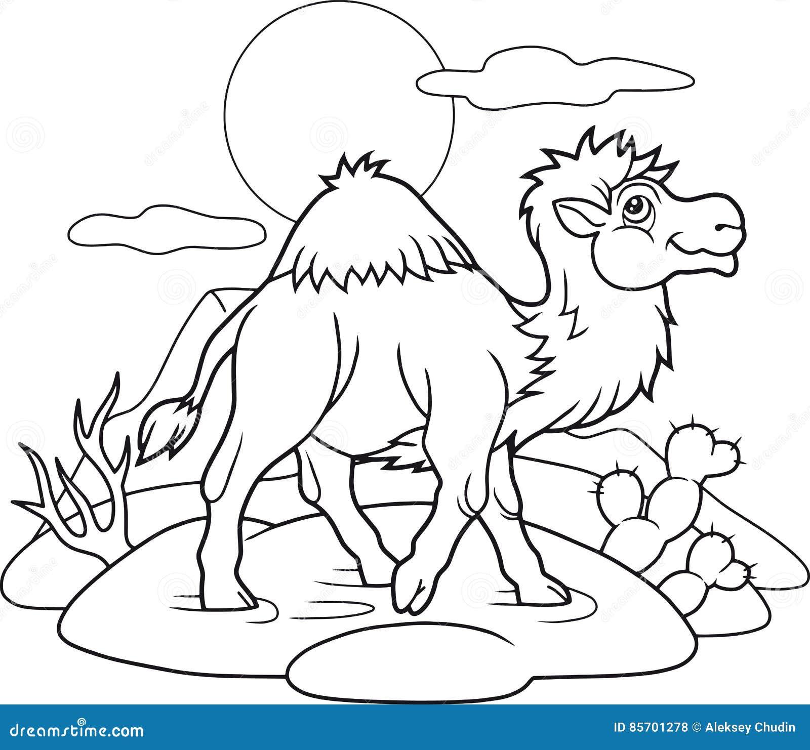 Dumny wielbłąd iść przez pustyni