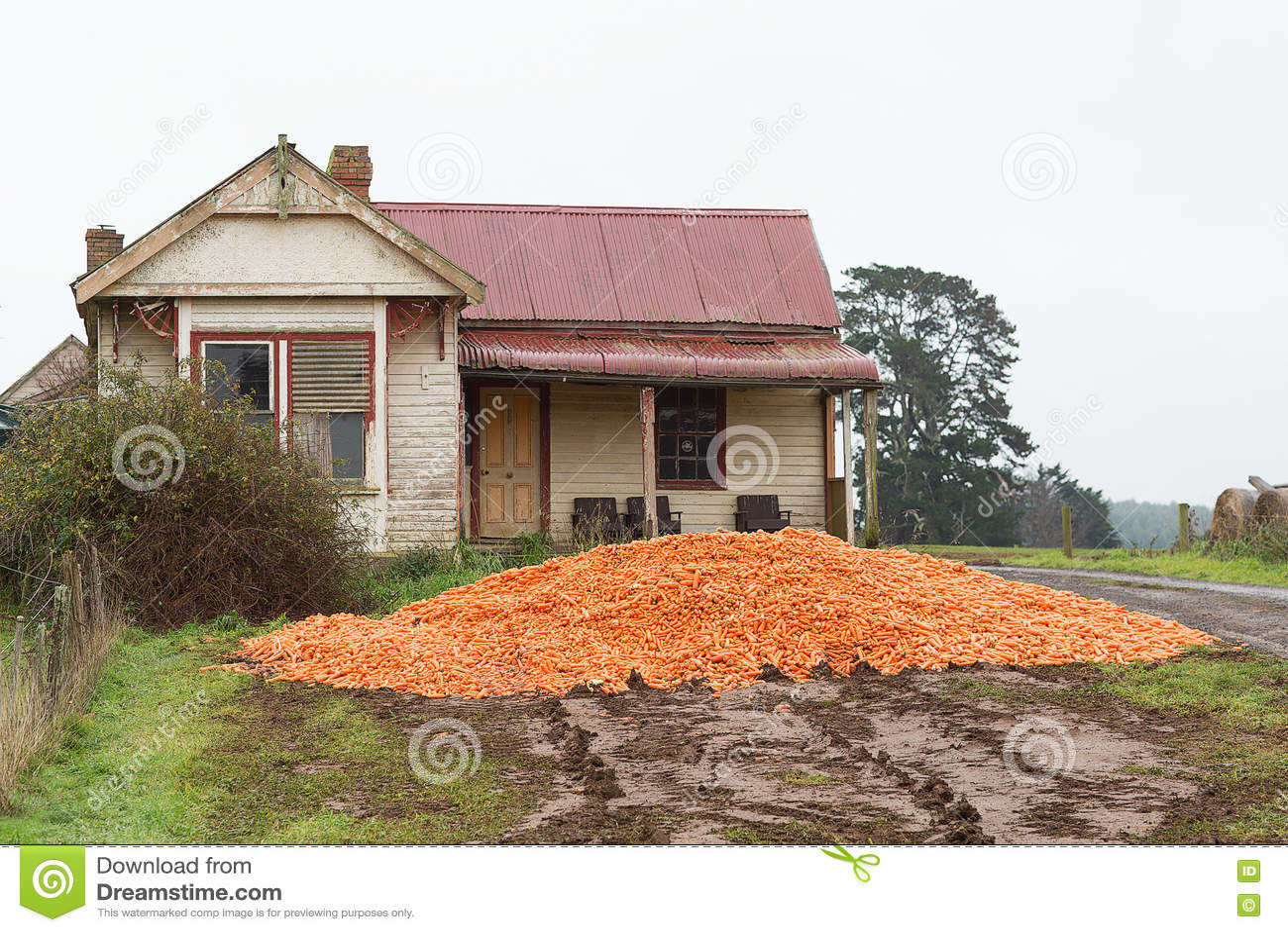 Dumped Carrot Crop Tasmania